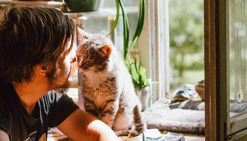 gatos en hogar