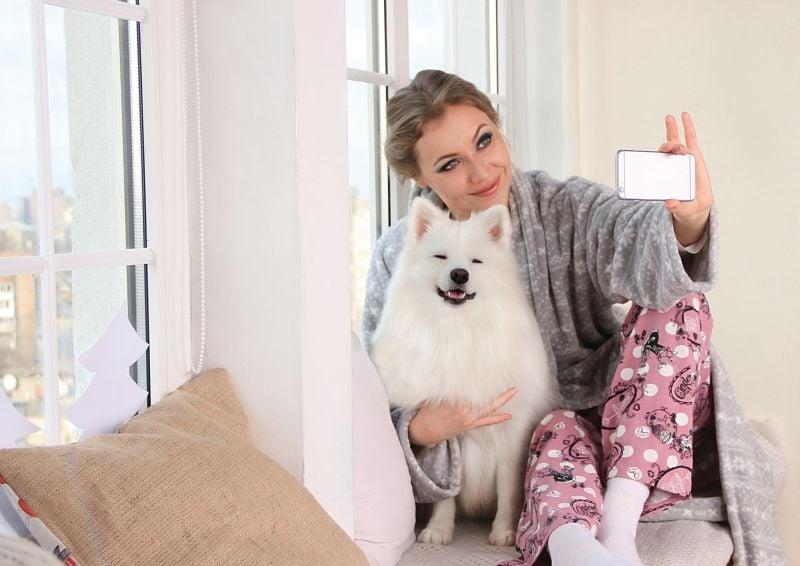 perros en el hogar